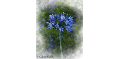 The Blue Bloom In Watercolor