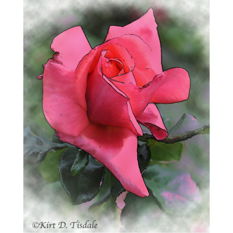 Red Rose Bud In Watercolor