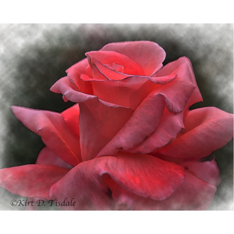 A Pink Rose Bud In Watercolor