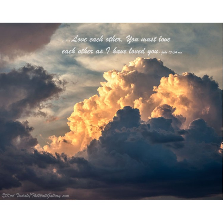 Peace And Joy - Pink And White Camellia Bloom