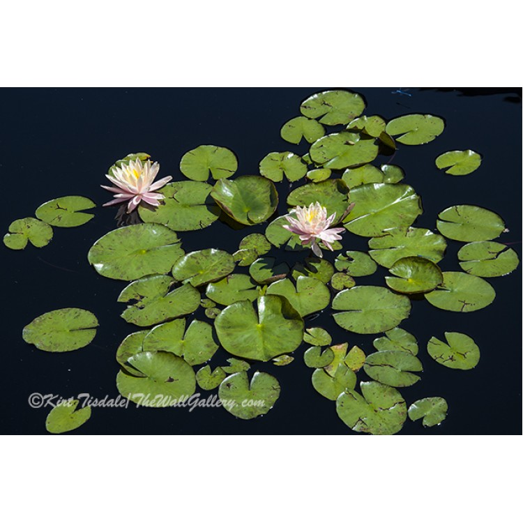 Bright Bold Orchid