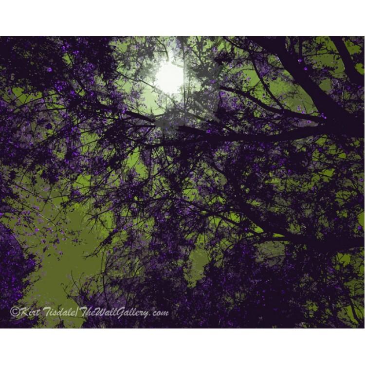 Purple Barren Branches