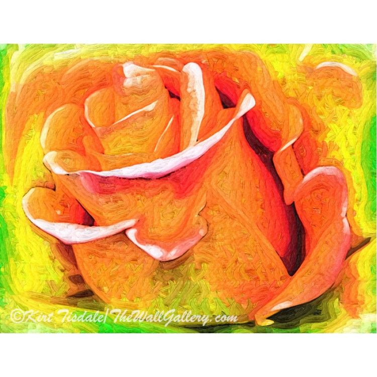 Orange Flame Rose