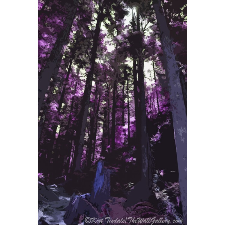Purple Stand Of Trees