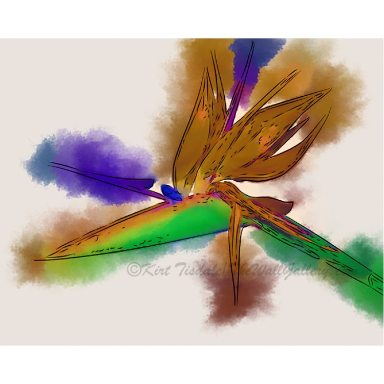 Bird Of Paradise In Abstract Watercolor