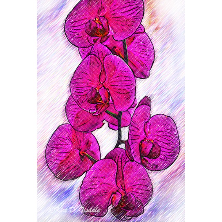 Sketched Orchid Blooms