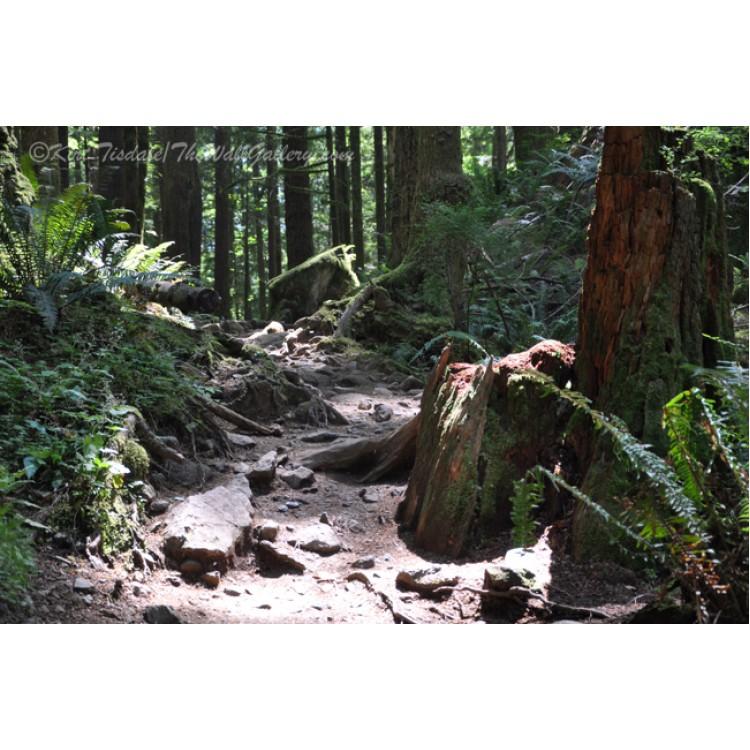 Arizona Old West Wagon
