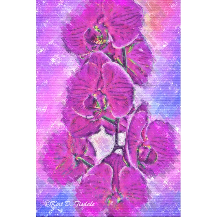 Pink And Purple Orchid