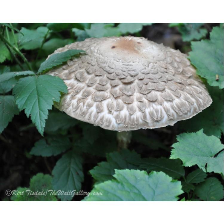 Colorado Ski Slopes In The Summer