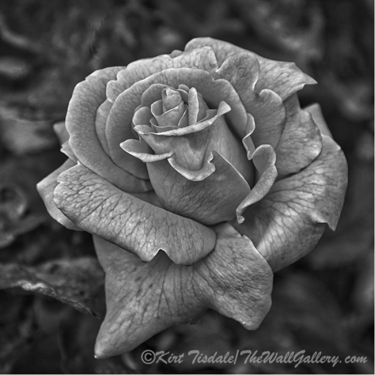 The Unfolding Of Petals
