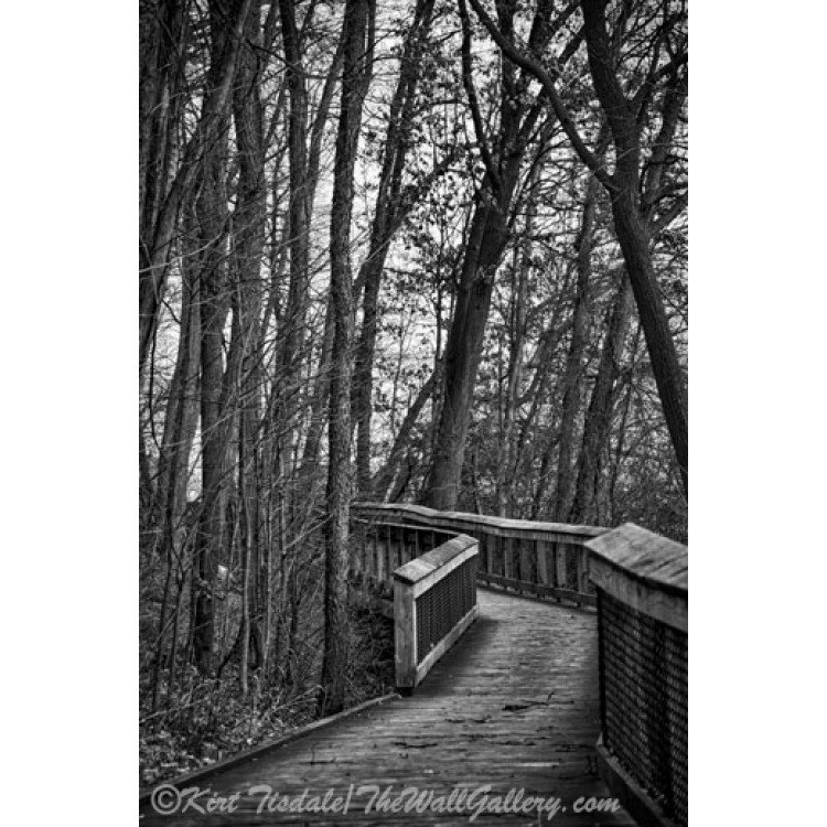 Wooden Walkway In The Woods