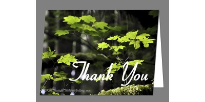 In the Forest Thank You Card