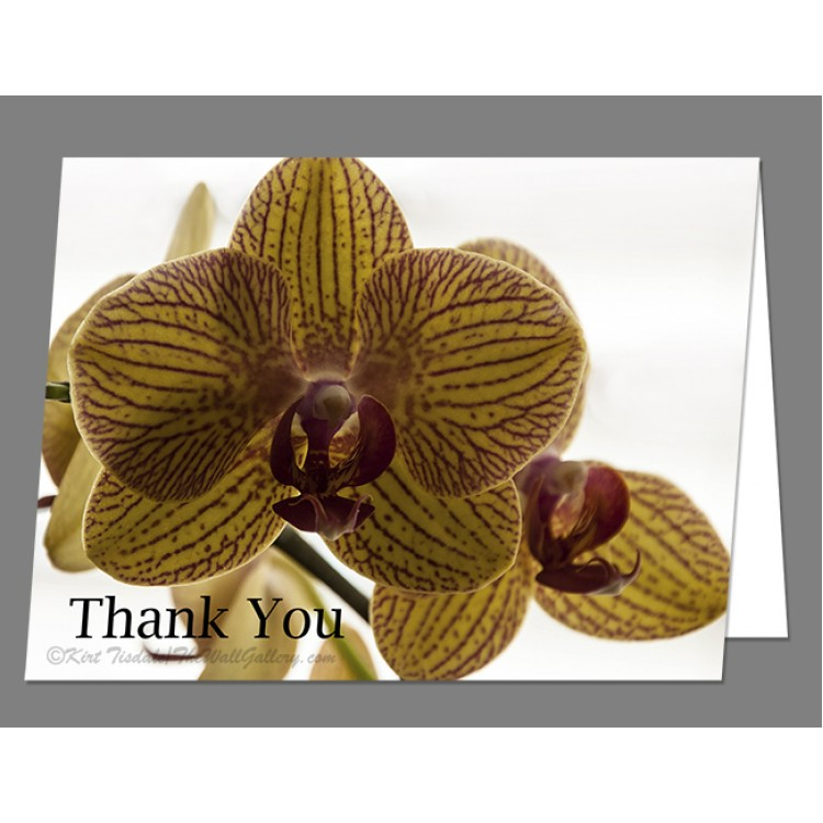Red Veined Orchid Thank You Card