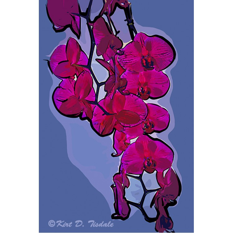 The Beauty Of An Orchid