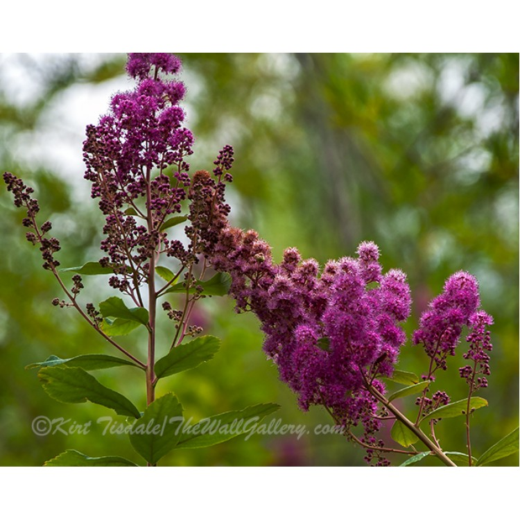 Vivid Floral On A Hike