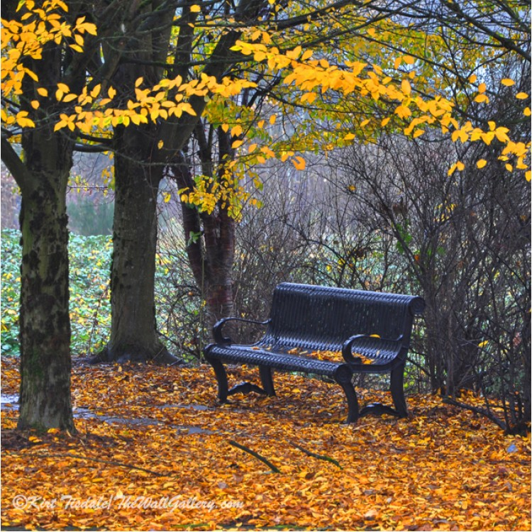 Fall Park Bench
