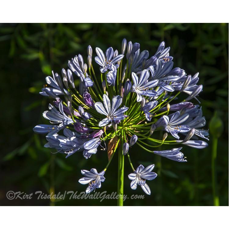Sunlight On Flower Petals
