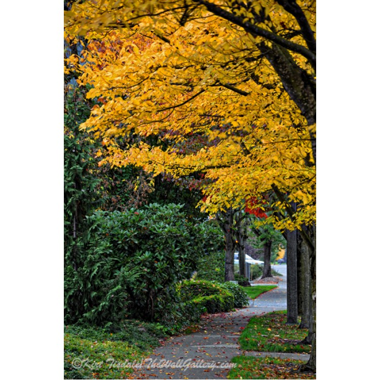 Snohomish River In Washington