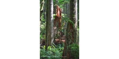 Sunlit Forest Stump