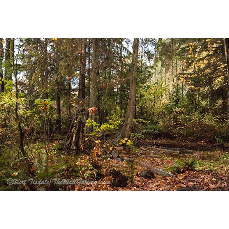Fall Forest In Lake Stevens, Washington