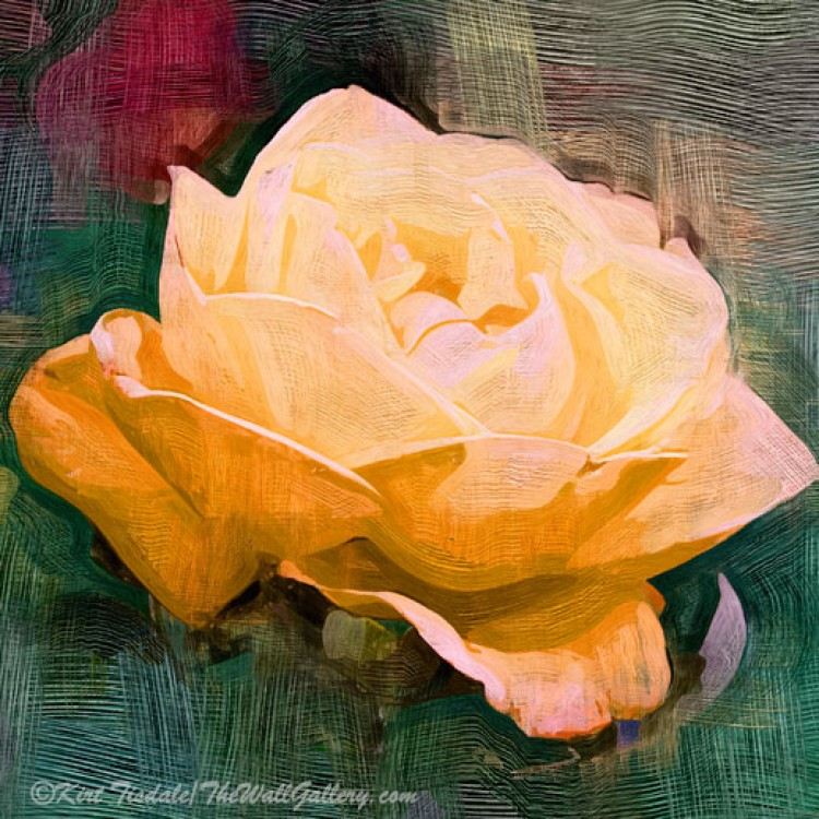 Yellow Radiant Rose