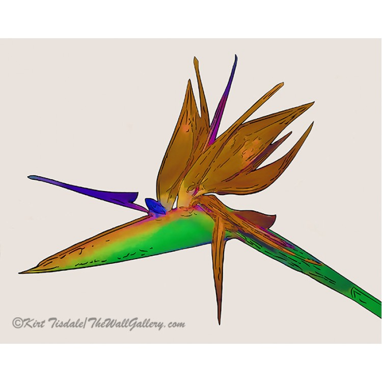 Tropical Bird Of Paradise Watercolor
