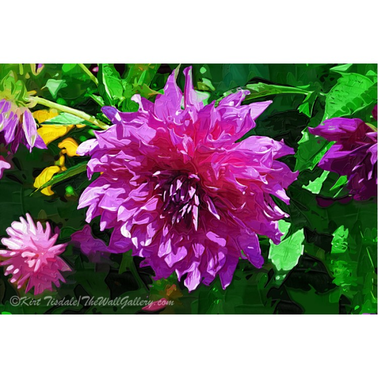 Purple Dahlia Perfection