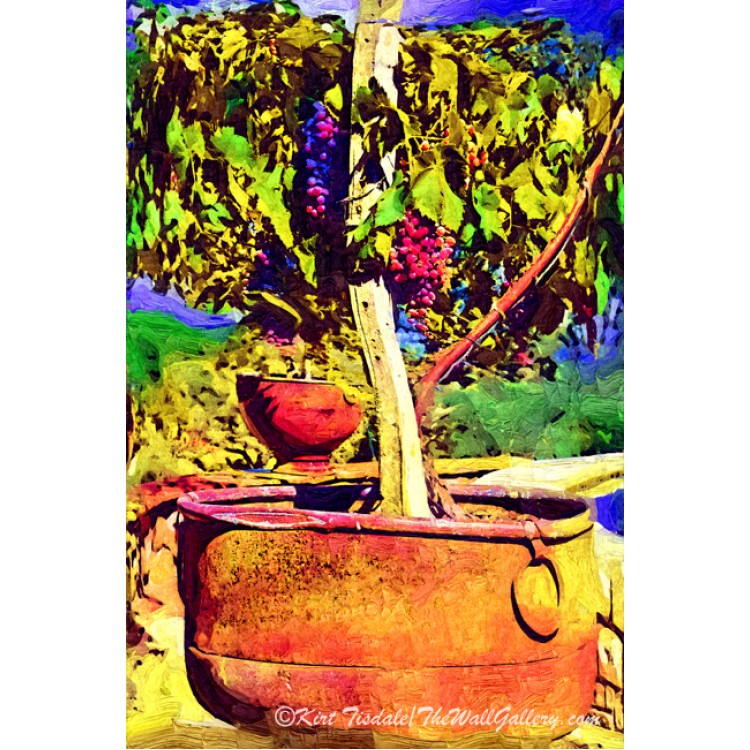 Potted Grapevine