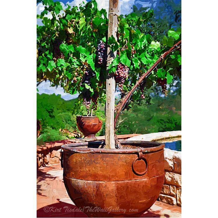 Grapevine In Iron Pot