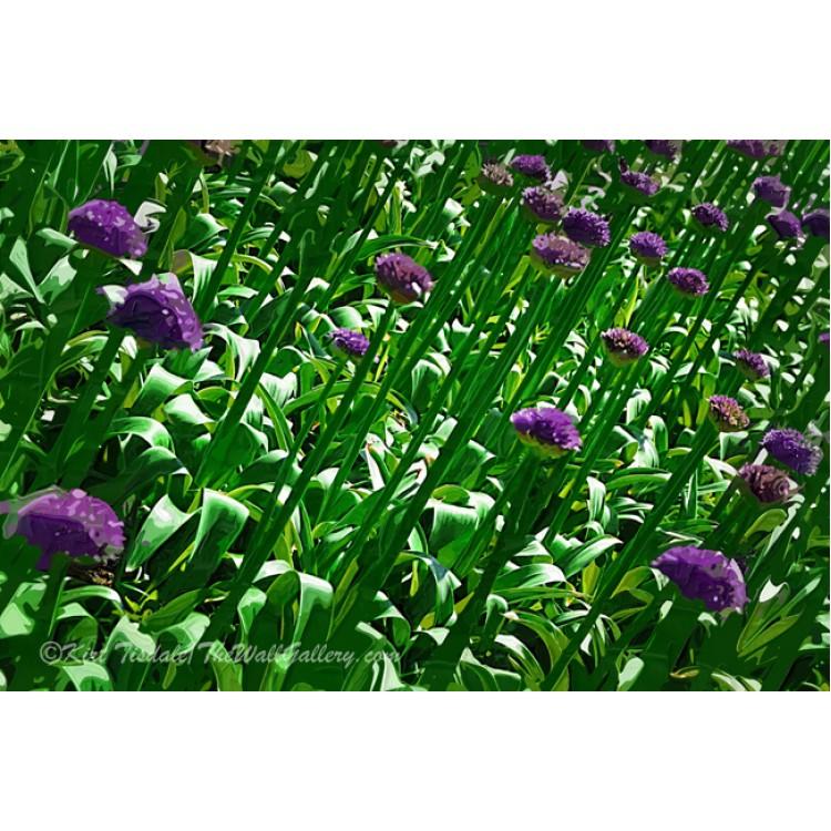 Purple Blooms At A Slant