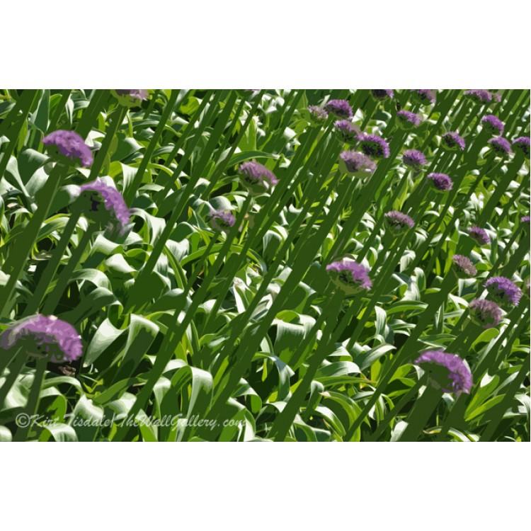 Rows Of Purple Flowers