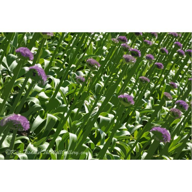 Rows Of Purple Flowers