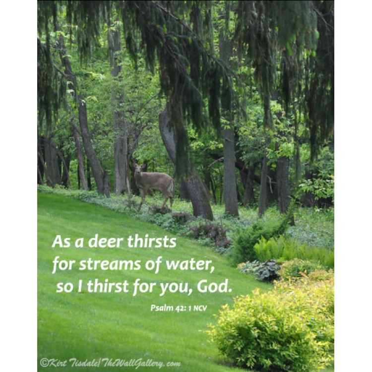 As A Deer Thirsts