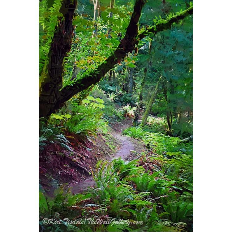 Winding Trail