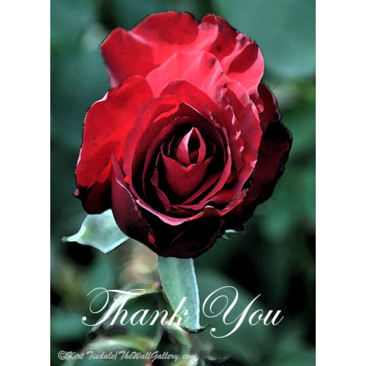 Red Rose Bloom Thank You Card