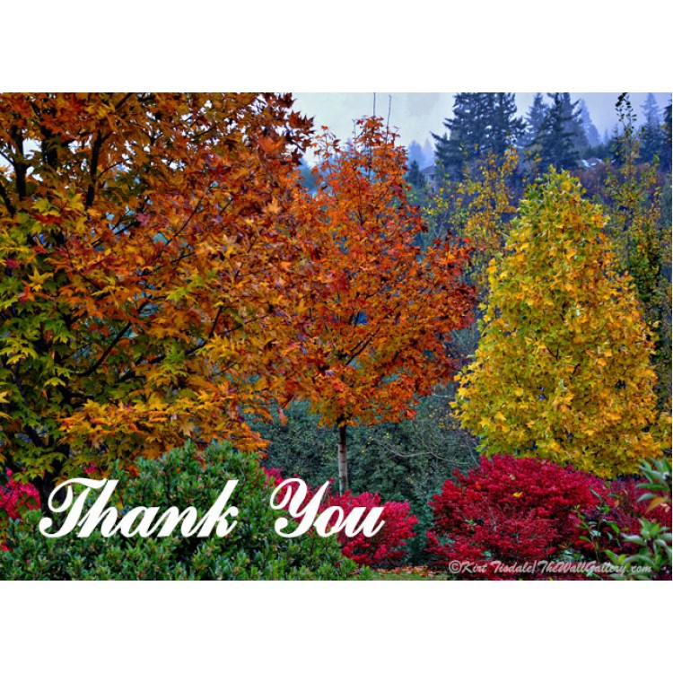 Fall Color In The Woods Thank You Card
